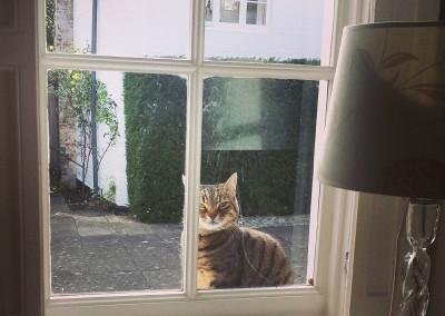 Tiggy as an intruder