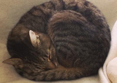Tiggy in a ball
